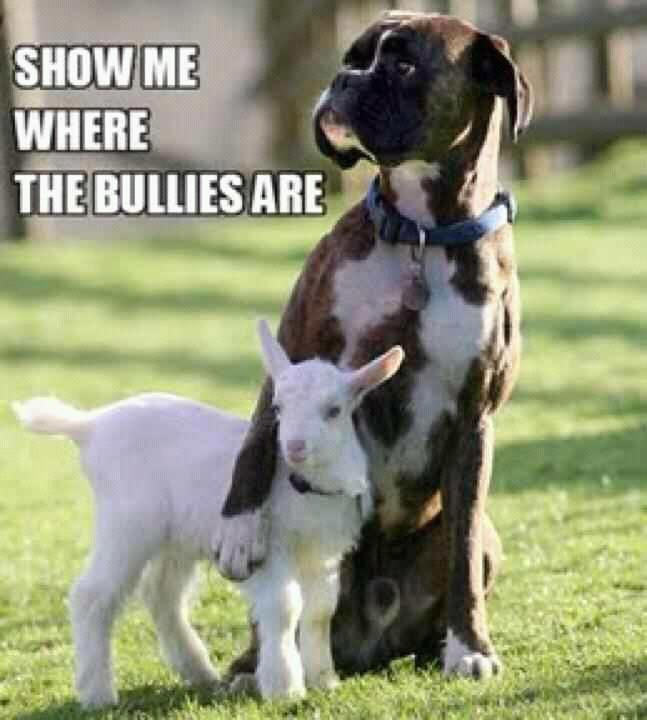 "Dog protecting a baby goat (""Show me where the bullies are"")"